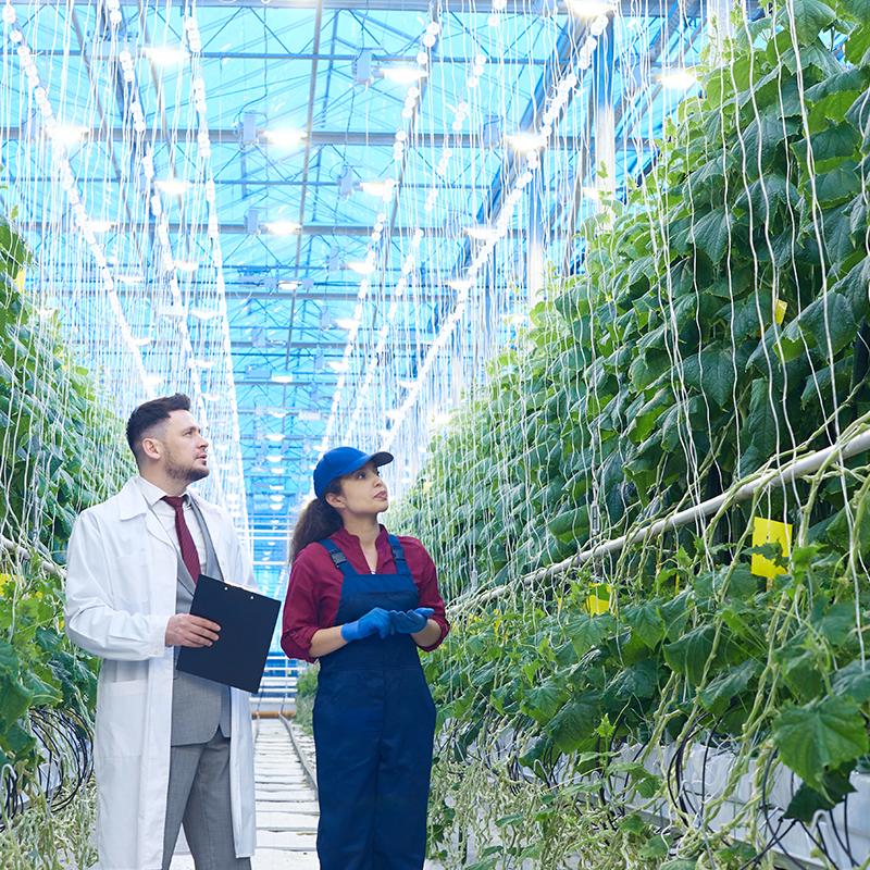 una mujer con Overol y un hombre en un abrigo de laboratorio con un soporte de Portapapeles en un invernadero mirando a plantas altas